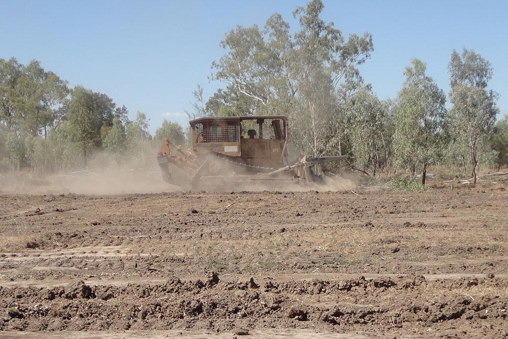 Vegetation Clearing